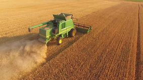 Agricultural machine gathers grain. stock video