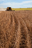 Agricultural machine harvesting soybean field. Stock Photos