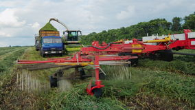 Agricultural machinery to harvest. Harvester collects grass in a heap, the other machines will ship in grass truck. Agricultural machinery to harvest. Harvester stock video footage