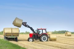 Agricultural machinery a tractor removes hay bales from the field after harvesting wheat. Harvest on the field. Harvesting of cereals. Agriculture stock photo
