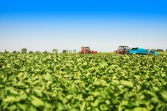 Agricultural machines in a soy field in a sunny summer day. Royalty Free Stock Photo