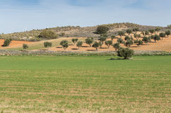 Agricultural mosaic landscape. In Toledo Province, Spain Royalty Free Stock Photos