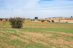 Agricultural mosaic landscape. In Toledo Province, Spain Stock Images