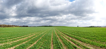 Agricultural panorama Stock Photography