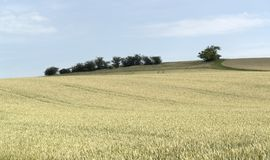 Agricultural panoramic scenery with ripe grain field Stock Photography