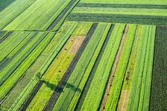 Agricultural Parcel. Bird's eye view of the Fields and Agricultural Parcel Royalty Free Stock Image