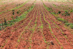 agricultural plot Stock Photography