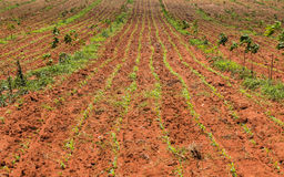 agricultural plot Royalty Free Stock Images