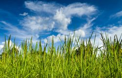 Agricultural plots landscape royalty free stock photos