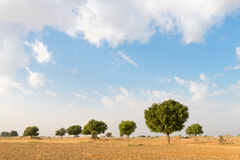 Agricultural ploughed land field in desert Royalty Free Stock Photo