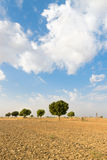 Agricultural ploughed land field in desert Stock Image