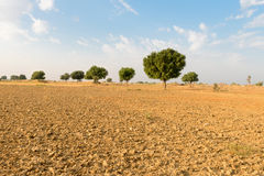 Agricultural ploughed land field in desert Stock Photography