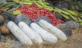 Agricultural produce  from the garden Royalty Free Stock Photo
