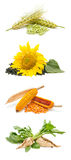 Agricultural products Stock Photography