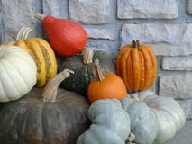 Agricultural Products featuring the colors of Fall Stock Photography