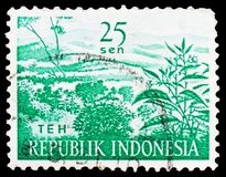 Agricultural Products - Tea TEH, serie, circa 1960. MOSCOW, RUSSIA - FEBRUARY 20, 2019: A stamp printed in Indonesia shows Agricultural Products - Tea TEH, serie stock photography