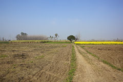Agricultural punjabi landscape Stock Photo