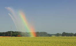 Agricultural rainbow. Image of a water sprinkler generating a rainbow in a wheat field during the irrigation process Stock Photos