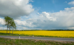 Agricultural raps field across the road. Agricultural field of the blossoming raps behind the road under the cloudy sky Royalty Free Stock Photography