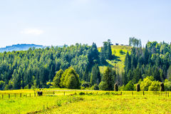 Agricultural reality in Ukraine royalty free stock photos