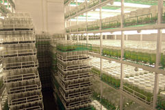 Agricultural research labs Stock Images