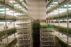 Agricultural research labs Stock Photos