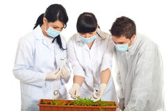 Agricultural researchers in laboratory. With new plants in a big pot having conversation isolated on white background royalty free stock photography