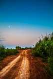 Agricultural road Royalty Free Stock Photos