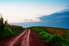 Agricultural road Royalty Free Stock Images