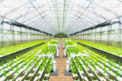 Agricultural robot water spraying or detect weed in hydroponic garden, Technology smart farm concept.  stock image
