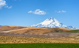 Agricultural rolling hills and Mt. Hood. Mt. Hood looms in the background while rolling fields of grain and bales of hay lay in alfalfa field in Dufur, Oregon Royalty Free Stock Photos