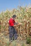 Agricultural scene, farmer or agronomist inspect corn field Stock Image
