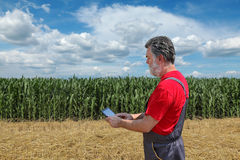 Agricultural scene, farmer or agronomist inspect corn field Royalty Free Stock Photo