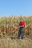 Agricultural scene, farmer or agronomist inspect corn field Stock Photography