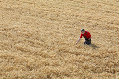 Agricultural scene, farmer or agronomist inspect wheat field Stock Images