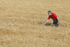 Agricultural scene, farmer or agronomist inspect wheat field Royalty Free Stock Image