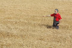 Agricultural scene, farmer or agronomist inspect wheat field Royalty Free Stock Photography