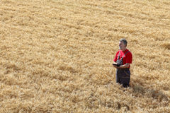 Agricultural scene, farmer or agronomist inspect wheat field Royalty Free Stock Photos