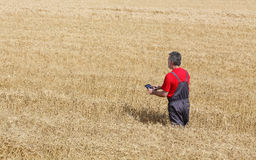 Agricultural scene, farmer or agronomist inspect wheat field Royalty Free Stock Photo
