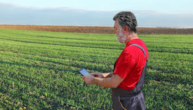 Agricultural scene, farmer or agronomist inspect wheat field Stock Photography