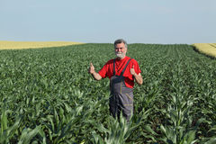 Agricultural scene, farmer in corn field Stock Photography