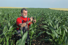 Agricultural scene, farmer in corn field Stock Photos