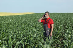 Agricultural scene, farmer in corn field Stock Photo