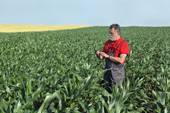 Agricultural scene, farmer in corn field Royalty Free Stock Photos