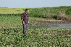 Agricultural scene, farmer in corn field royalty free stock photography