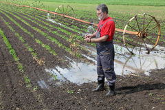 Agricultural scene, farmer in paprika field with watering system Royalty Free Stock Photos