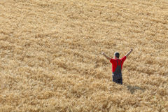 Agricultural scene, happy farmer in wheat field. Agriculture, happy farmer gesturing  in field ready to harvest, with hands and thumb up Stock Image