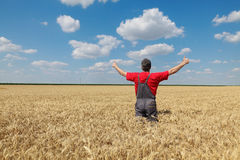 Agricultural scene, happy farmer in wheat field. Agriculture, happy farmer gesturing  in field ready to harvest, with hands and thumbs up Stock Photography