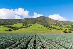 Agricultural scene of rows of broccoli plants pointing in perspective to beautiful green hills and mountains stock photo