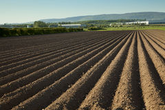 Agricultural scenery Stock Photo